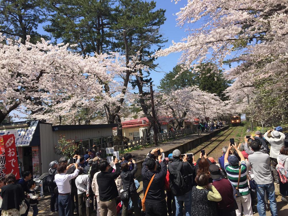 津軽鉄道 芦野公園に春がやってきた