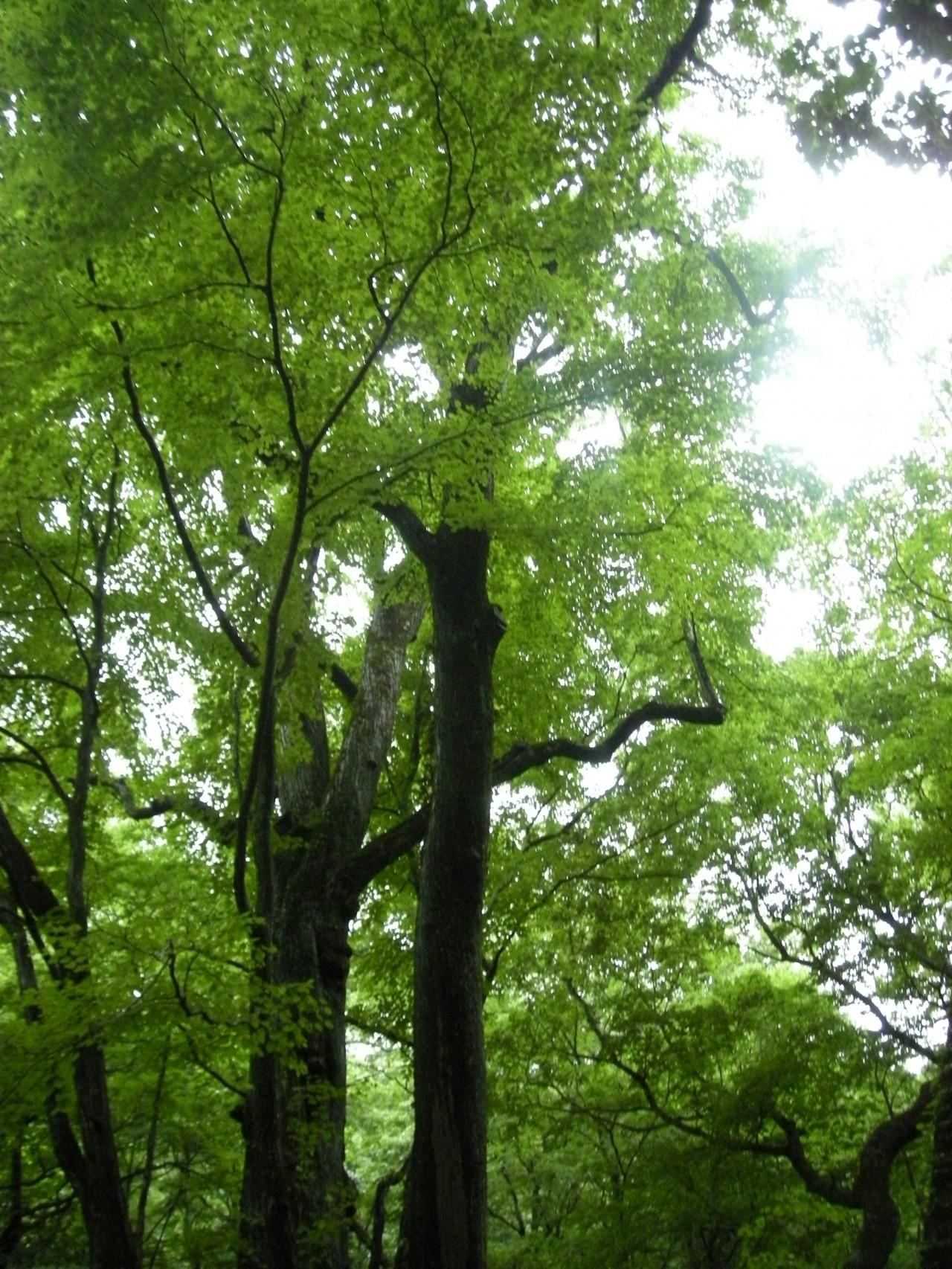 青森 三八 十和田市 風景 滝 林 ブナ 奥入瀬渓流
