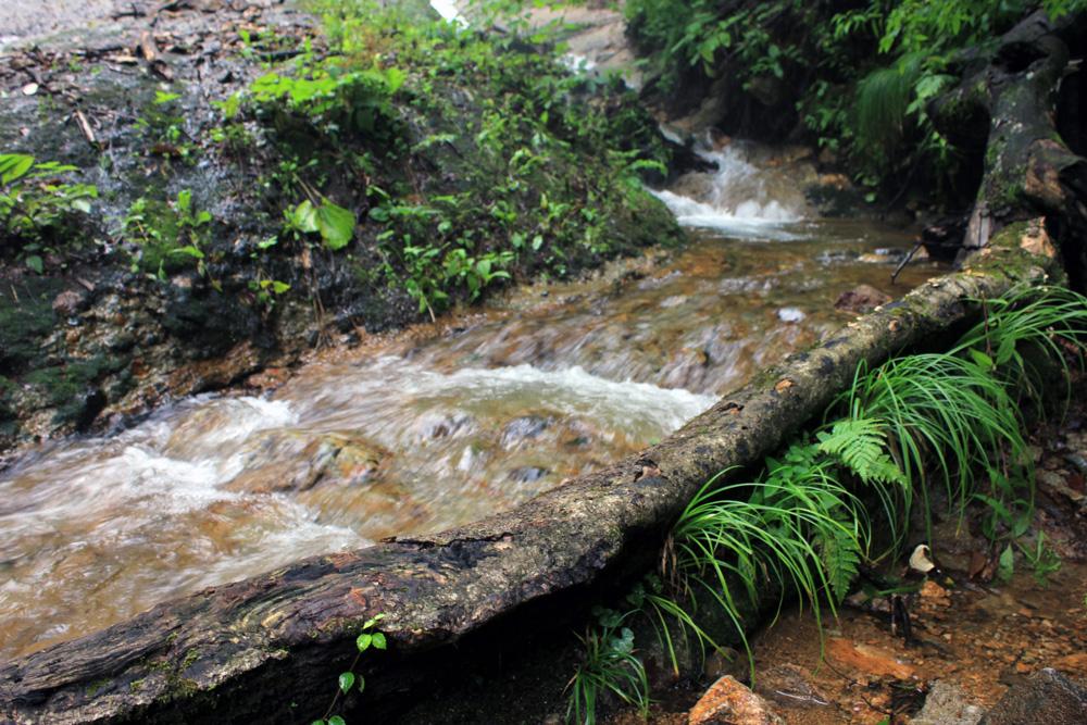 青森 三八 田子町 みろくの滝 風景 ブナ 原生林 小川