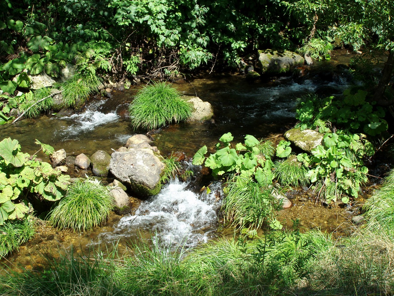青森 津軽 平川市 津苅川 風景 イワナ キャンプ 自然