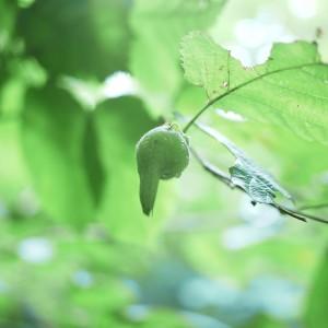 ミニ白神 森の花1