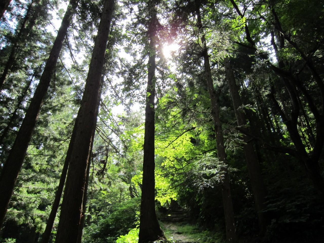 青森 風景 夏 津軽 弘前市 三十三観音 森林