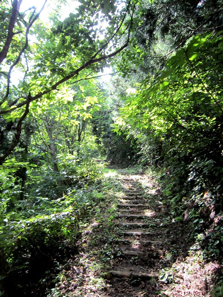 青森 風景 夏 津軽 弘前市 三十三観音 久渡寺 自然 森林 階段 木漏れ日