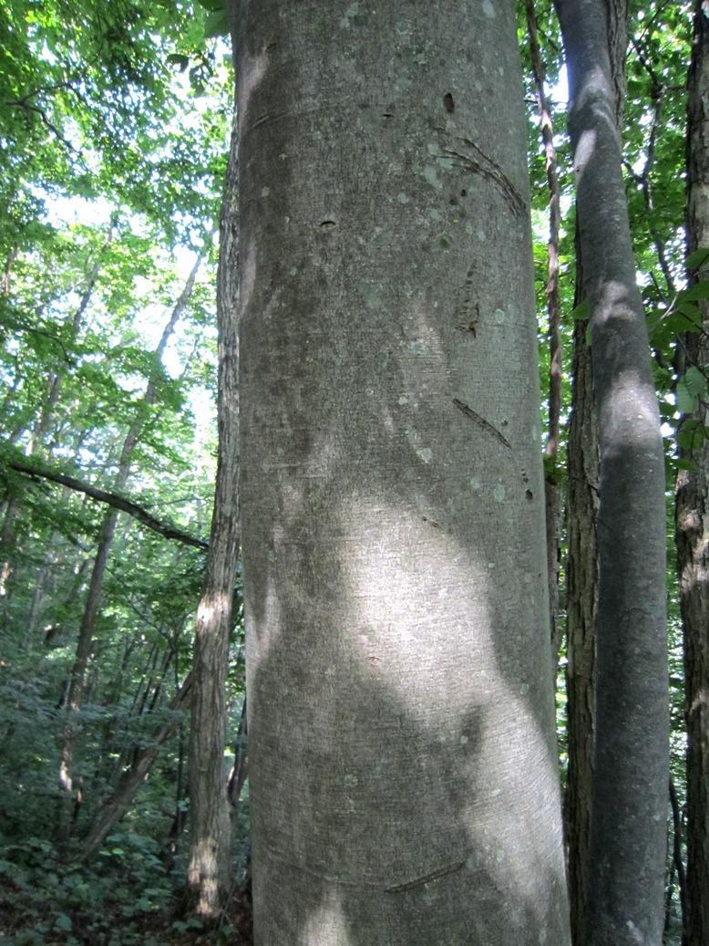 青森 風景 夏 津軽 弘前市 三十三観音 森林 木