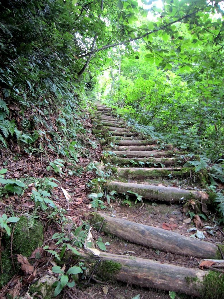 青森 風景 夏 津軽 弘前市 三十三観音 久渡寺 自然 森林 階段