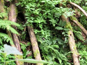 青森 風景 夏 津軽 弘前市 三十三観音 久渡寺 自然 森林