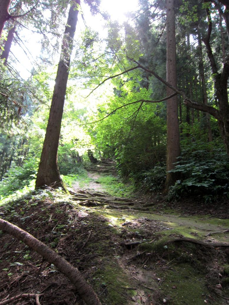 青森 風景 夏 津軽 弘前市 三十三観音 森林 木漏れ日