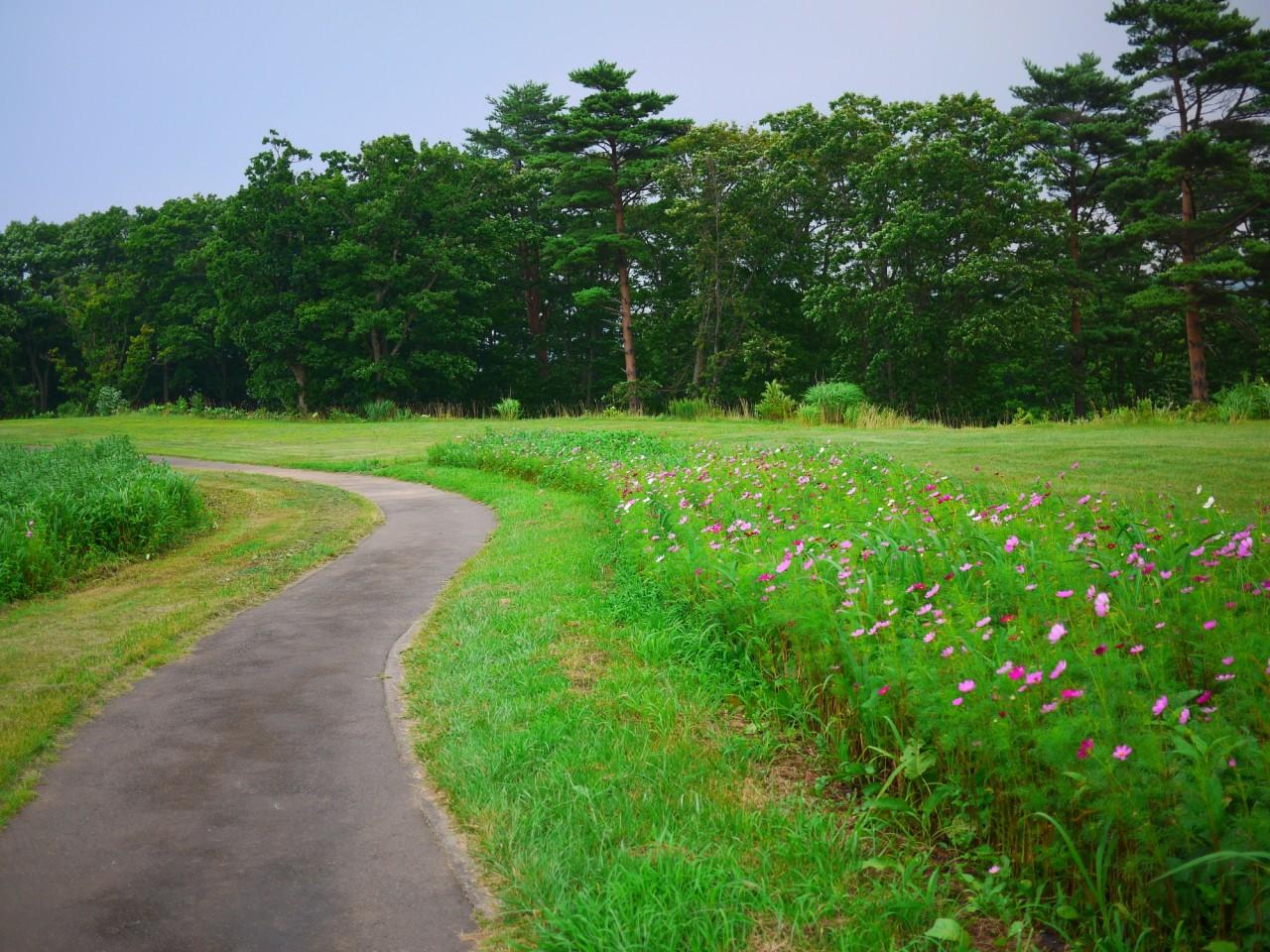 青森 津軽 青森市 風景 秋 林 モヤヒルズ 散策コース