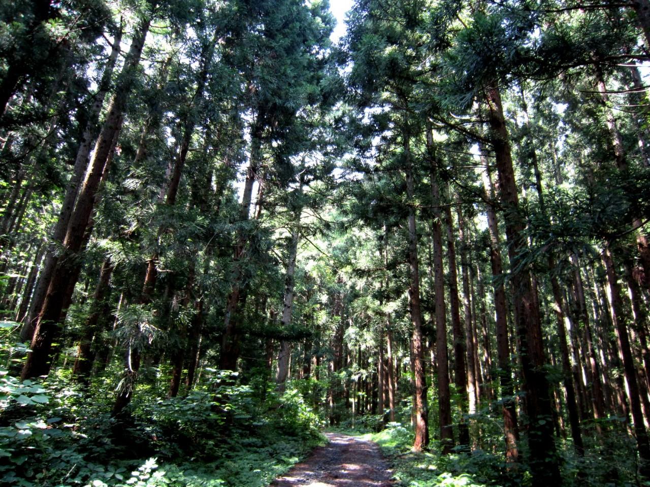 青森 風景 夏 津軽 弘前市 三十三観音 久渡寺 自然 森林 木漏れ日 山道