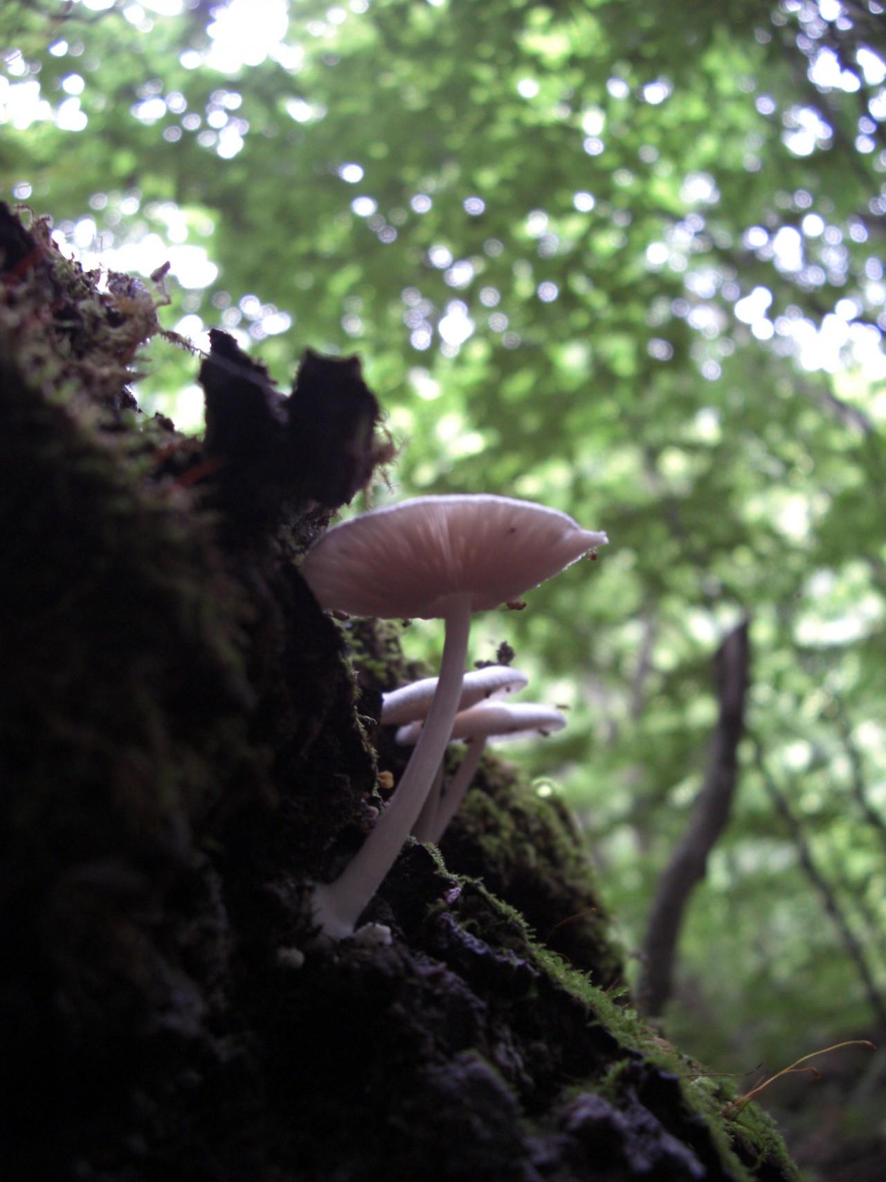 青森 風景 夏 上北 十和田市 奥入瀬渓流 緑 自然 森林 きのこ キノコ