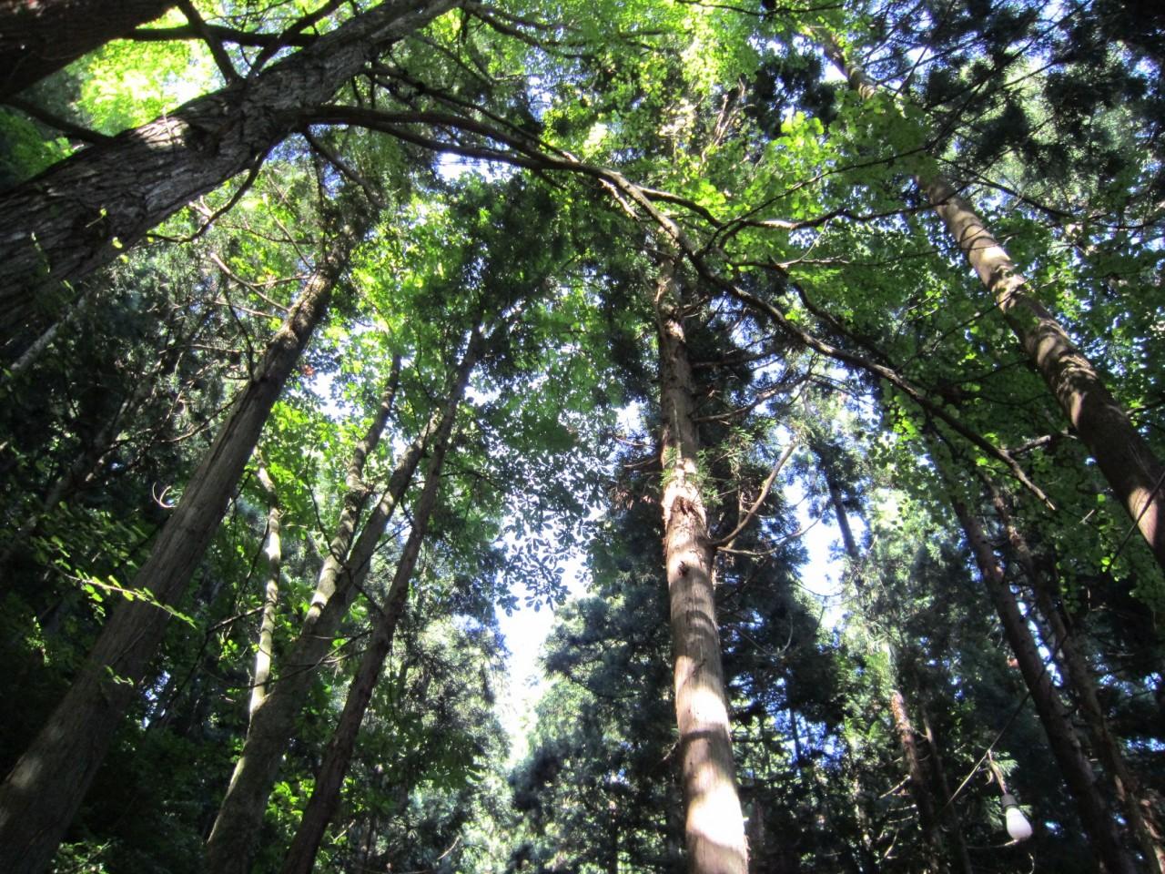 青森 風景 夏 津軽 弘前市 多賀神社 森林 木漏れ日