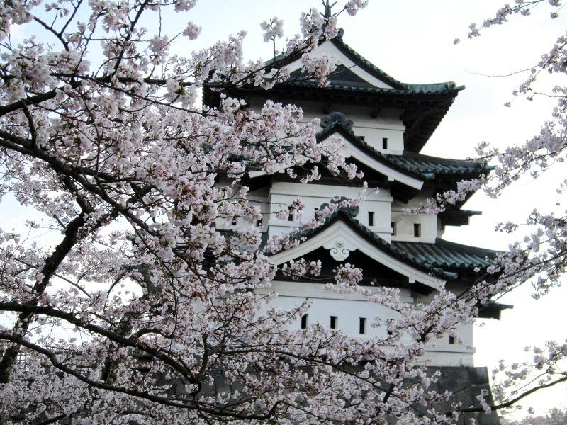 青森 風景 城 春 津軽 弘前市 弘前公園 桜