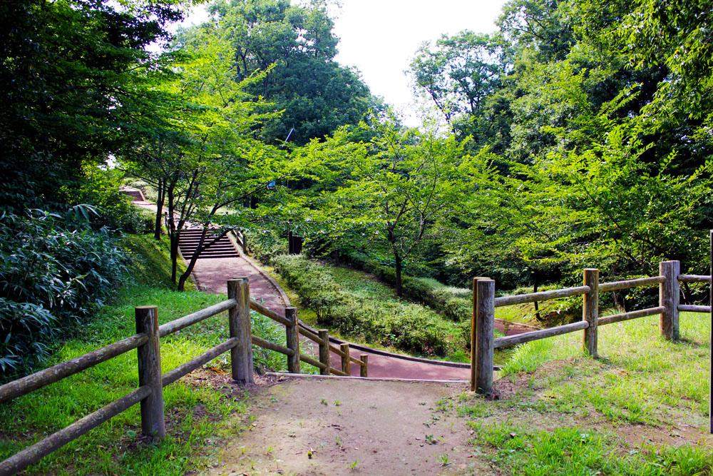 青森 風景 夏 三八 八戸市 南部山公園 並木 緑 自然 階段