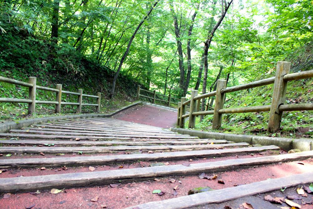 青森 風景 夏 三八 八戸市 南部山公園 自然 階段 森林 並木