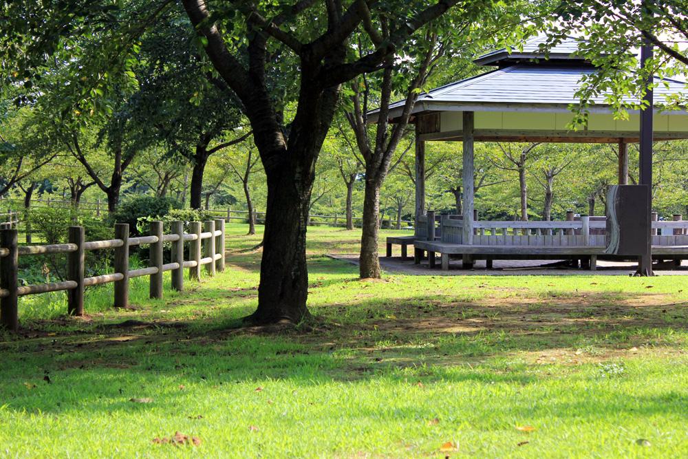 青森 風景 夏 三八 八戸市 南部山公園 並木 緑 自然 芝生 休憩 ベンチ