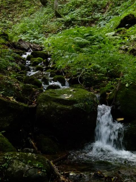 青森 津軽 青森市 風景 ブナ 白神山地 ブナ原生林の水 マイナスイオン 森林 大自然 滝 川