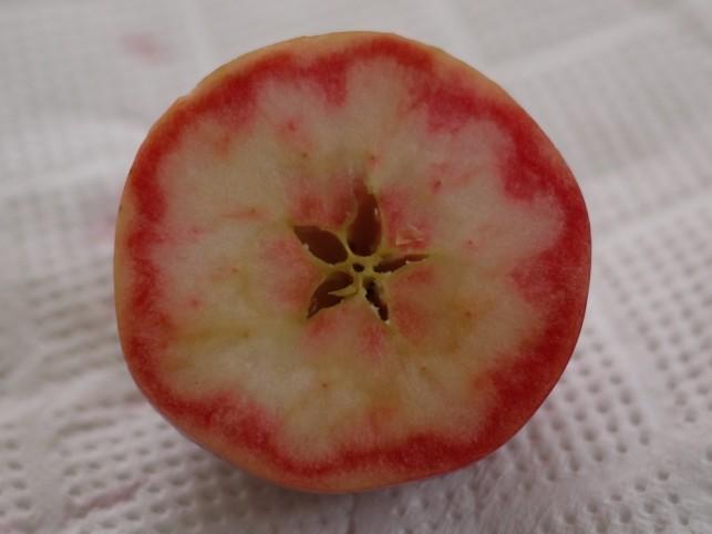 赤~いりんご輪切り