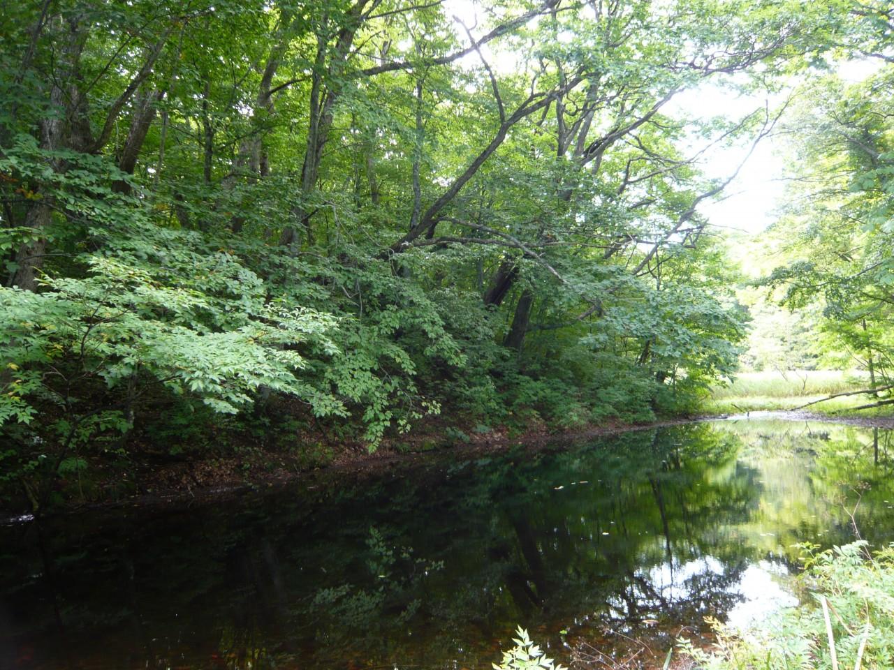 青森 上北 十和田市 風景 秋 奥入瀬渓流 蔦の森 瓢箪沼