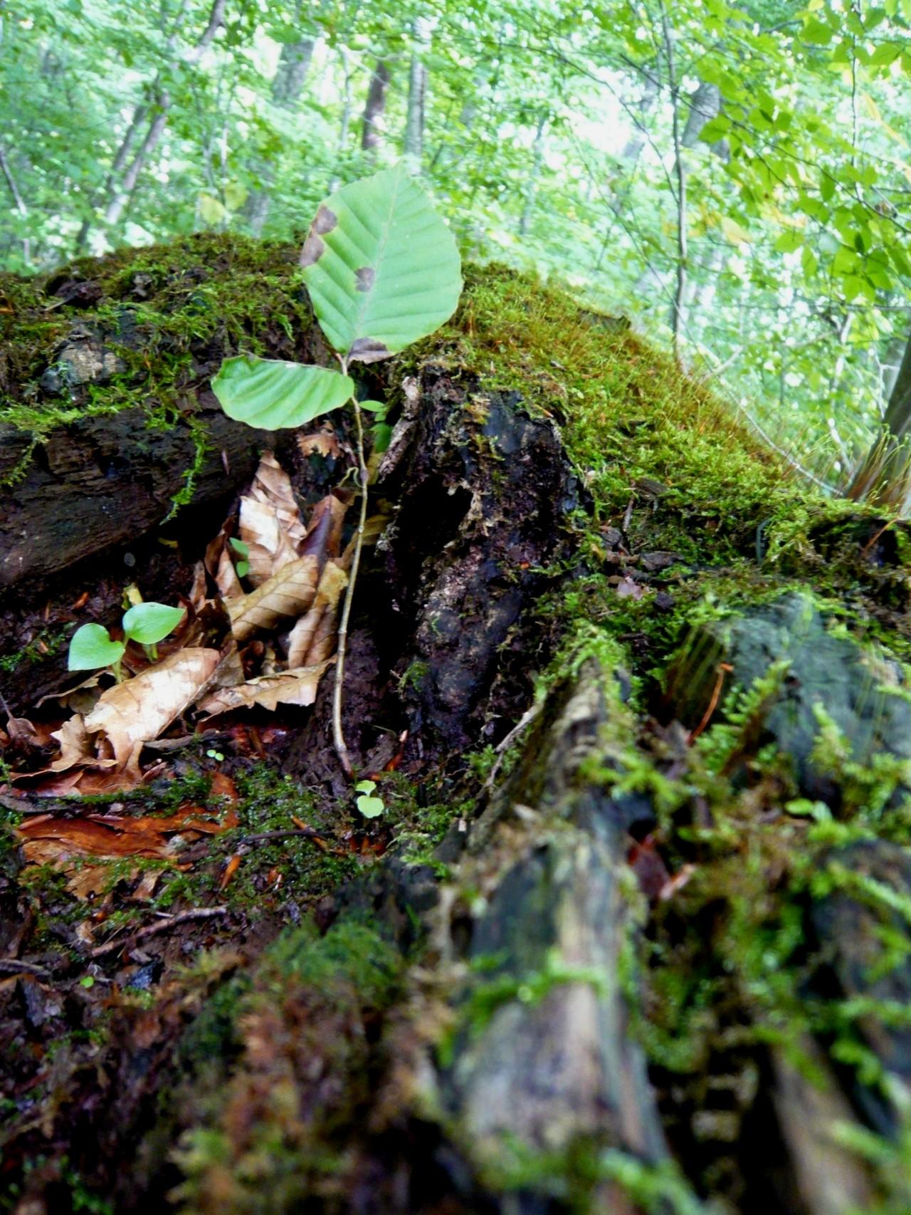 青森 上北 十和田市 風景 秋 奥入瀬渓流 蔦の森 自然 苔