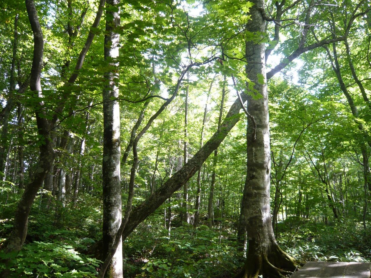 青森 上北 十和田市 風景 秋 奥入瀬渓流 自然 蔦の森