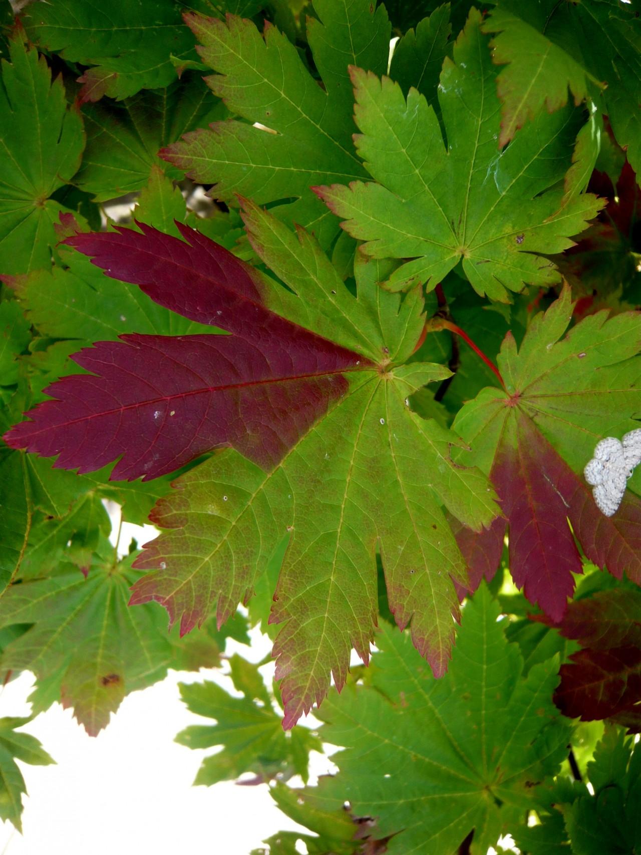 青森 上北 十和田市 風景 秋 奥入瀬渓流 紅葉 自然