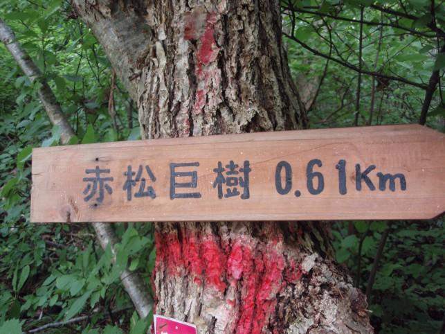 0.6キロ