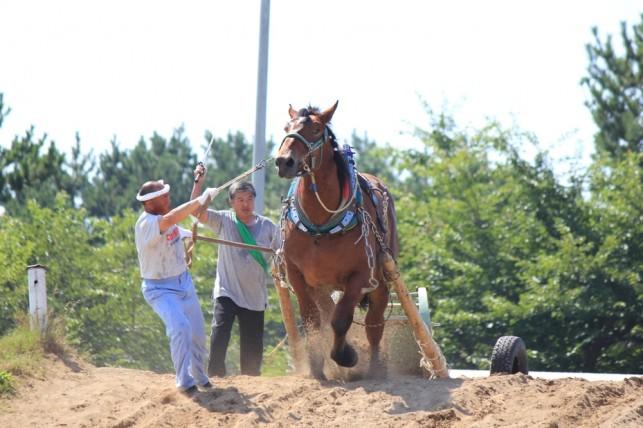 馬市まつり「馬力大会」 ~つがる市 平滝沼公園~