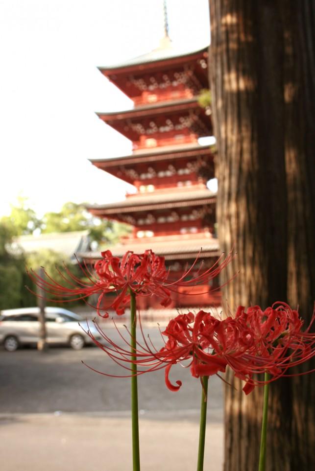 曼珠沙華と五重塔