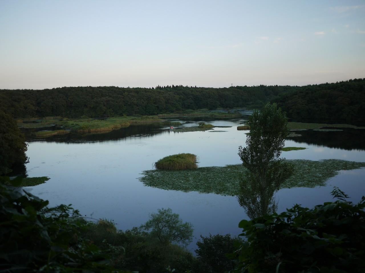 青森 風景 夏 三八 三沢市 小田内沼 ため池 浮島