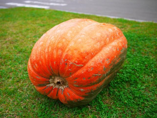 画像:かぼちゃ1