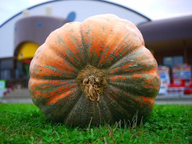 画像:かぼちゃ2