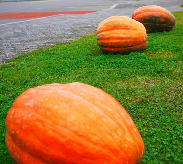 画像:かぼちゃ3