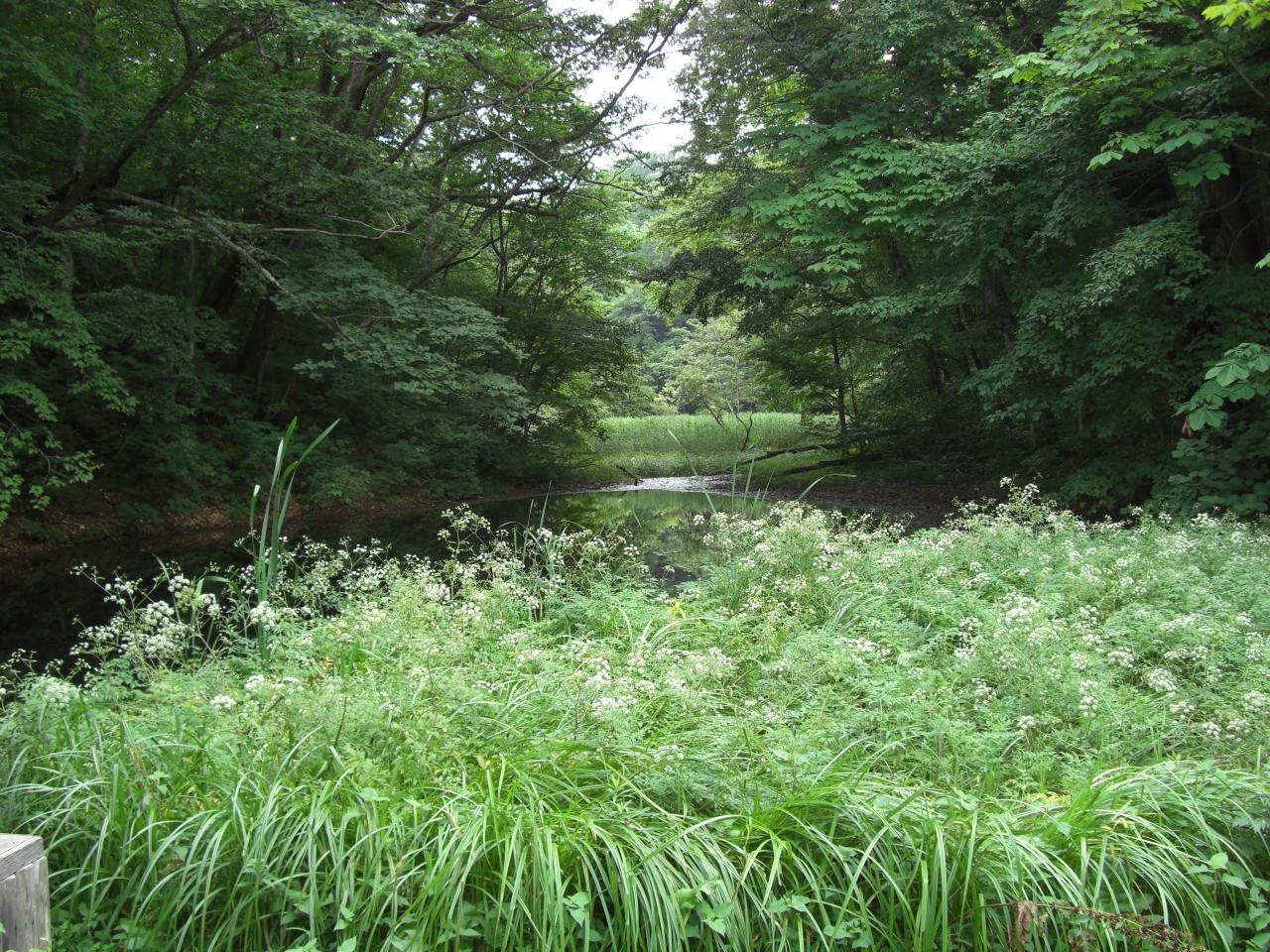 青森 風景 秋 上北 十和田市 湖畔 奥入瀬 森 蔦七沼 瓢箪沼