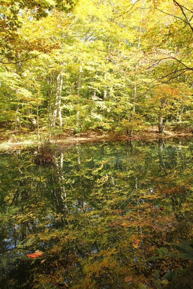 沼の魅力。蔦沼、睡蓮沼から地獄沼へ