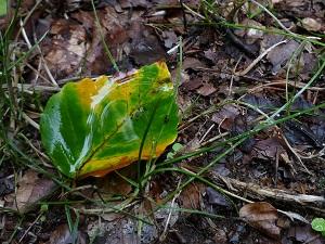 青森 風景 秋 上北 十和田市 奥入瀬渓流 自然 落ち葉