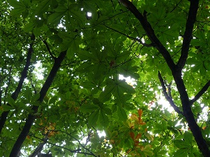 青森 風景 秋 上北 十和田市 奥入瀬渓流 自然 森林
