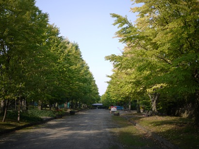 青森 風景 秋 津軽 弘前市 弘前城植物園 並木道