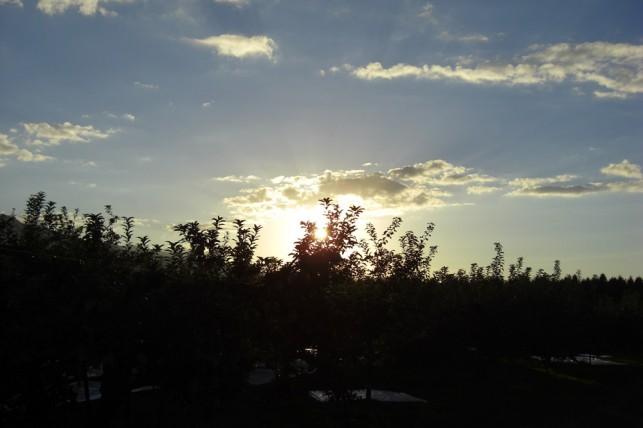 りんご園地