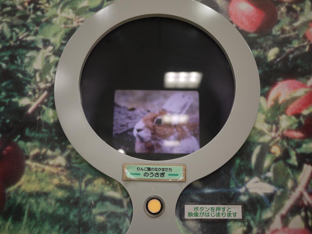 画像:ウサギ