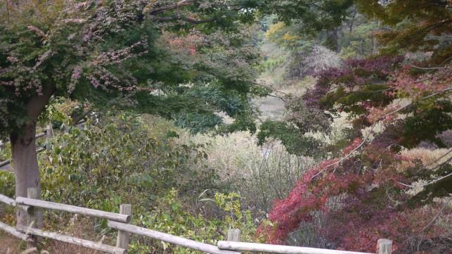 画像:芦野公園2
