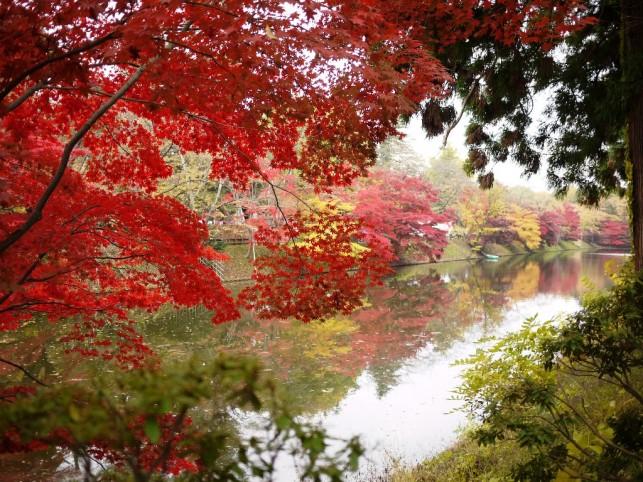 終幕を迎えた「弘前城 菊と紅葉まつり」