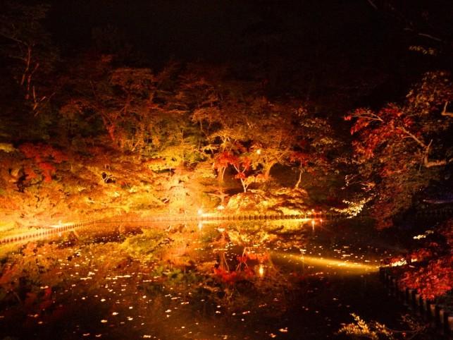 夜の闇に浮かび上がる紅葉