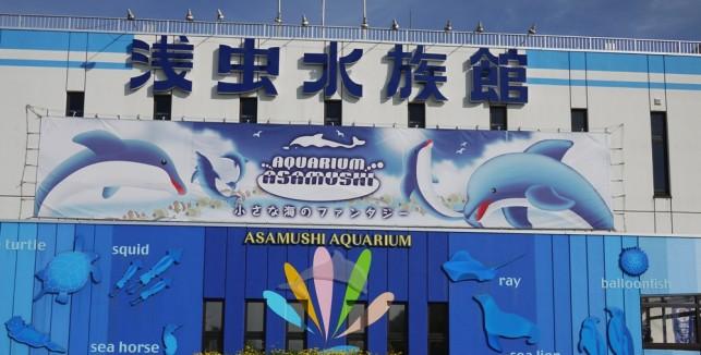 皆おいでよ♪すいすいすいすい水族館(浅虫)