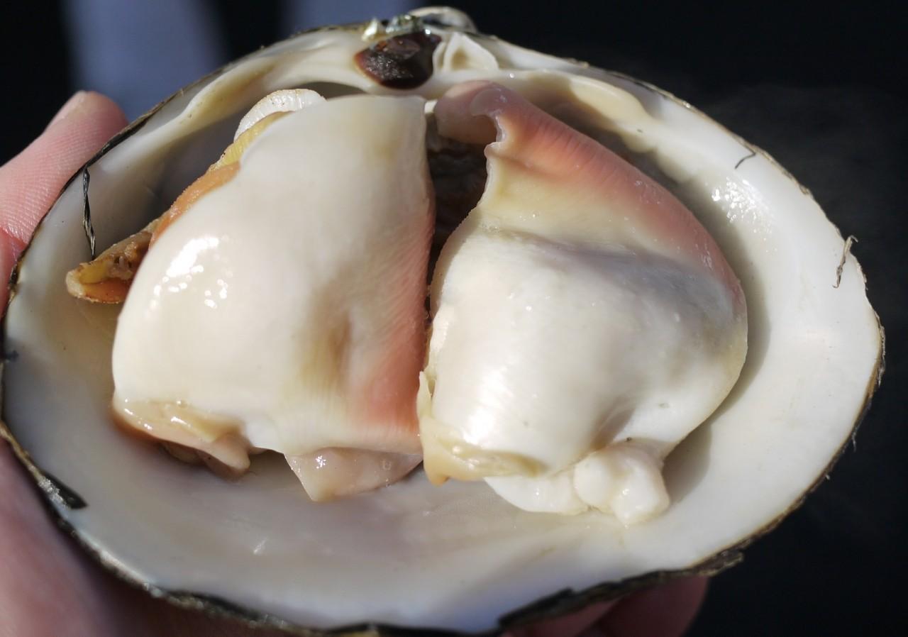 青森 食べ物 三八 三沢市 ほっき貝