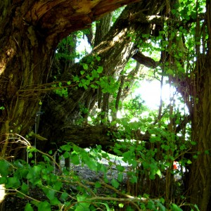 深浦町の「垂乳根(たらちね)のイチョウ」とオマケの「さわやかトイレ」