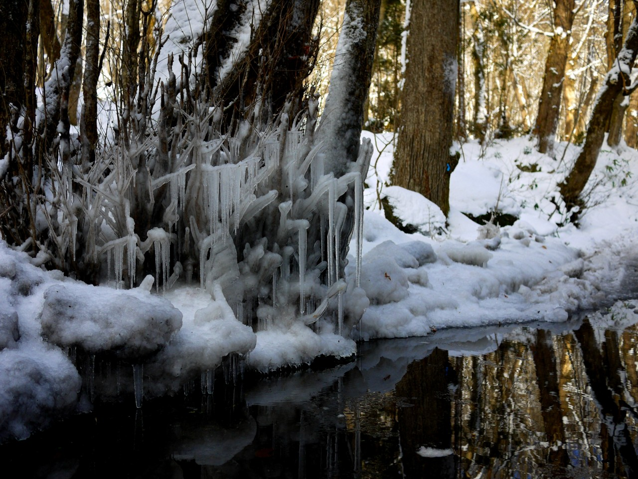青森 風景 冬 十和田 奥入瀬渓流 雪国 氷柱 つらら 水面 反射