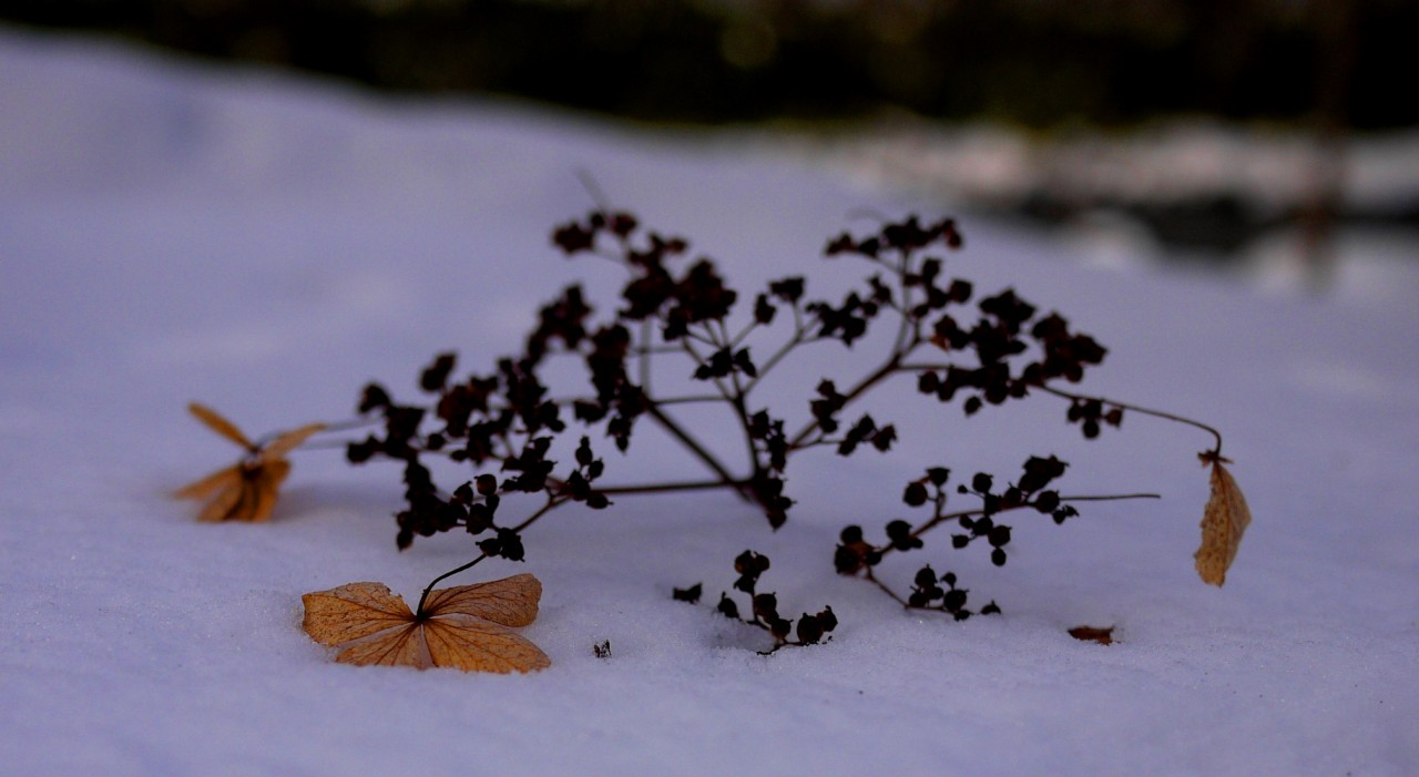 青森 風景 冬 十和田 奥入瀬渓流 雪国 雪化粧 葉