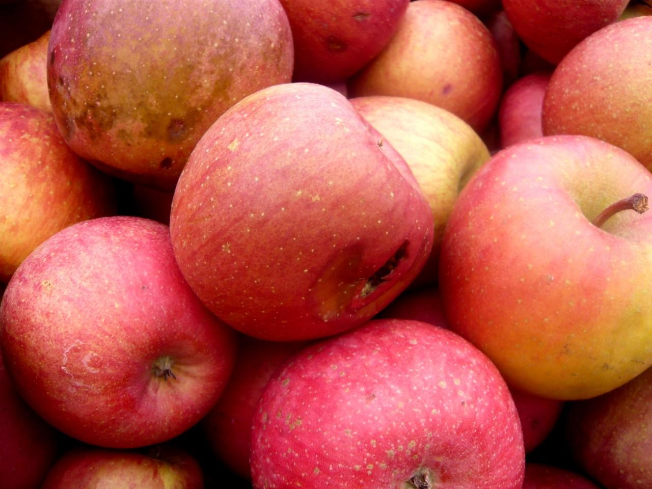 青森 リンゴ りんご 林檎