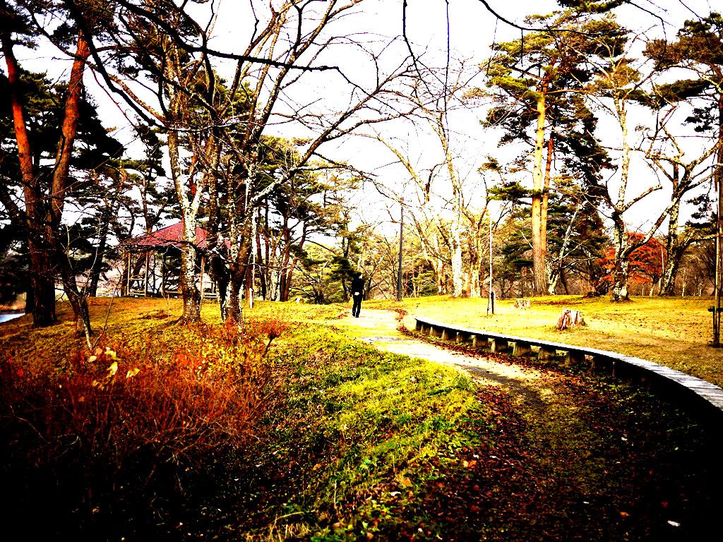 青森 風景 秋 冬 上北 六戸町 館野公園 幻想的 夕陽 木々 道