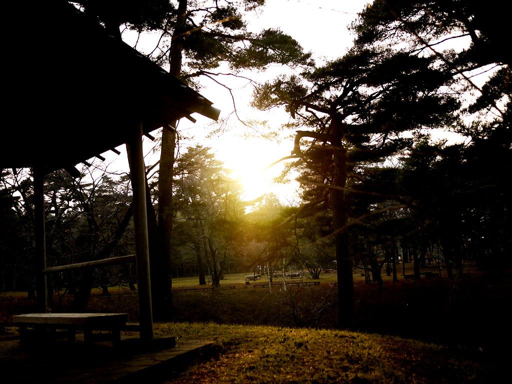 青森 風景 秋 冬 上北 六戸町 館野公園 幻想的 夕陽 木々